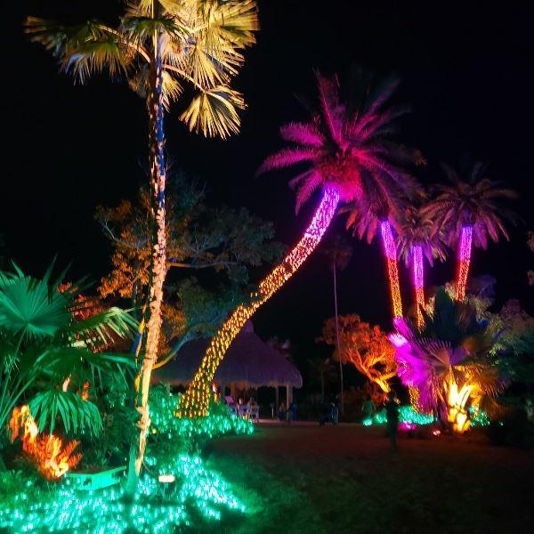 Naples Botanical Garden Christmas Lights.